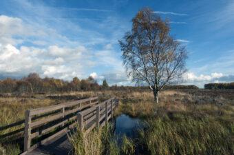 bridge on the flanders moss panoramio